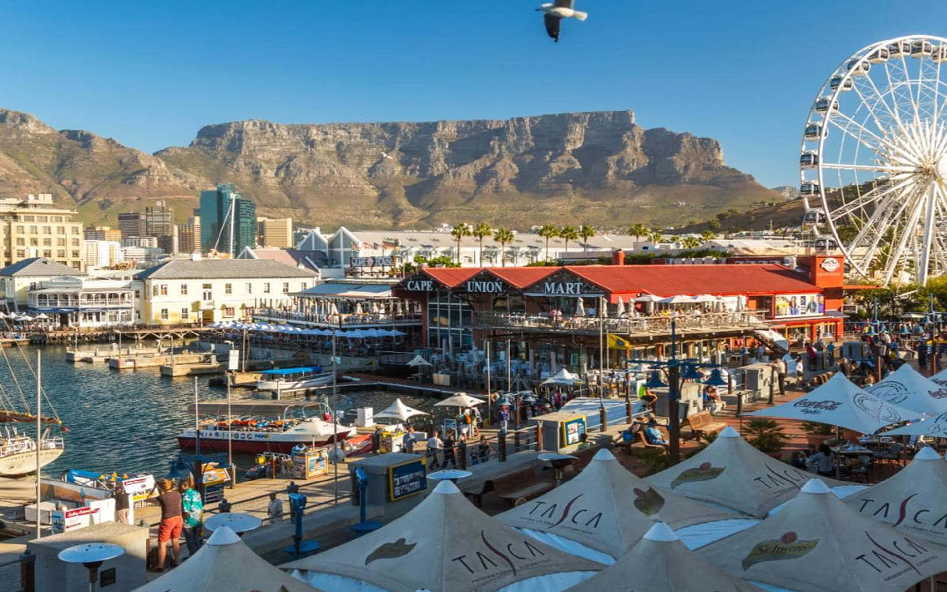 ROBBEN ISLAND AND TABLE MOUNTAIN FULL DAY TOUR