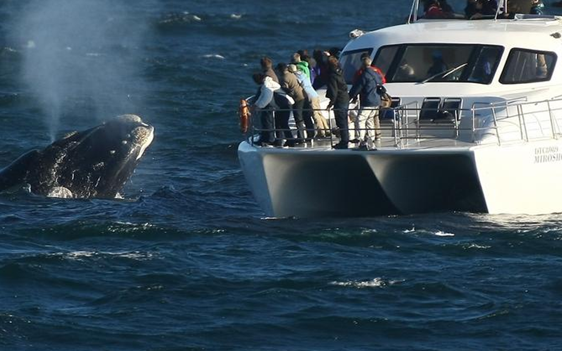 Find Whale Watching Private Tour -Sooo amaziiing